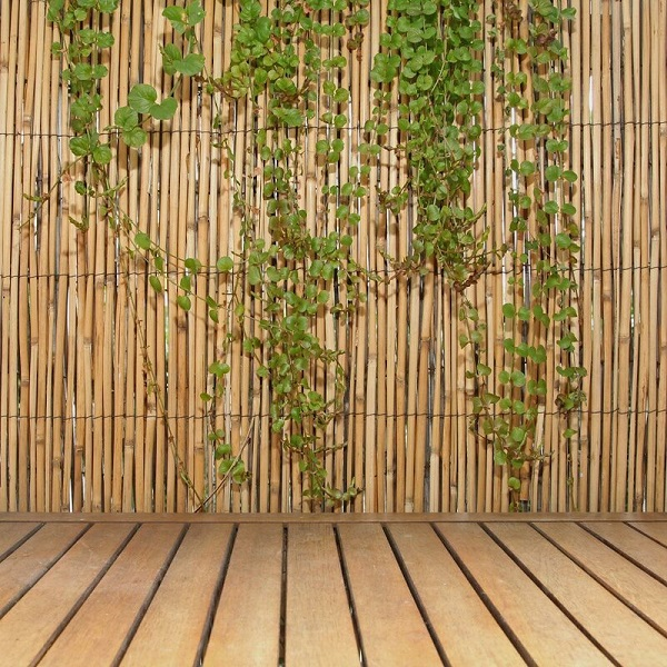 https://bambootrees.co.za/wp-content/uploads/2021/05/bamboo-fencing.jpg